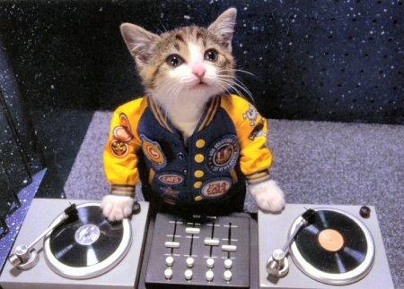 Gato diskjoke